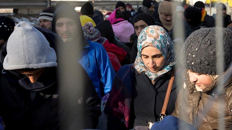 Flyktingar bakom ett stängsel.