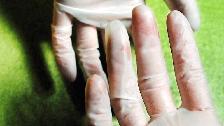 Två händer med plasthandskar på