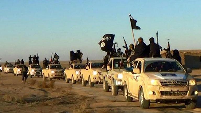 En karavan med IS-krigare på bilar