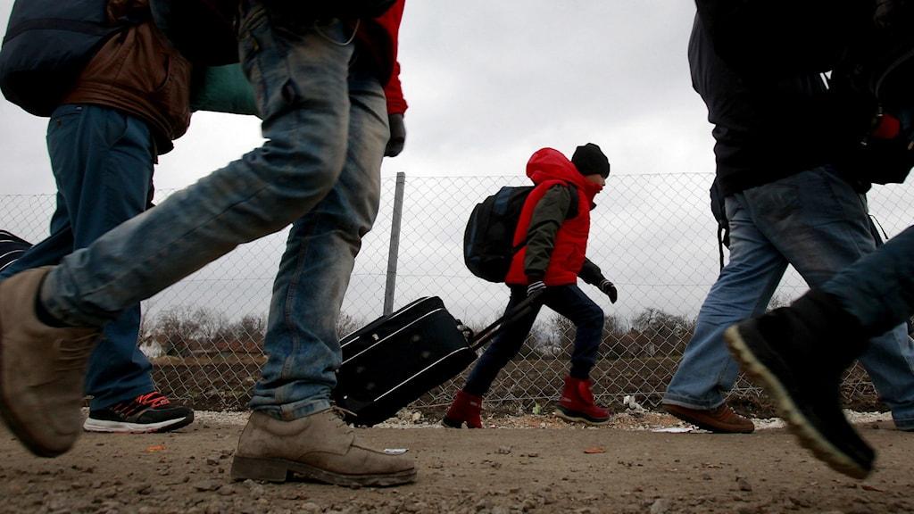 Migranter på gränsen till Serbien