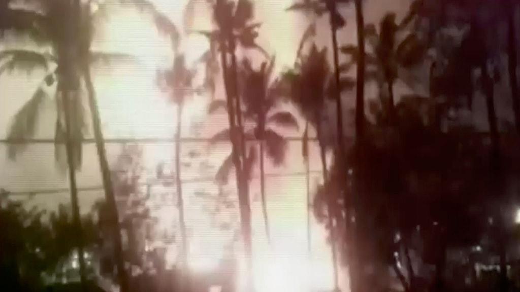 Palmer i förgrunden och ett mycket starkt ljussken i bakgrunden.
