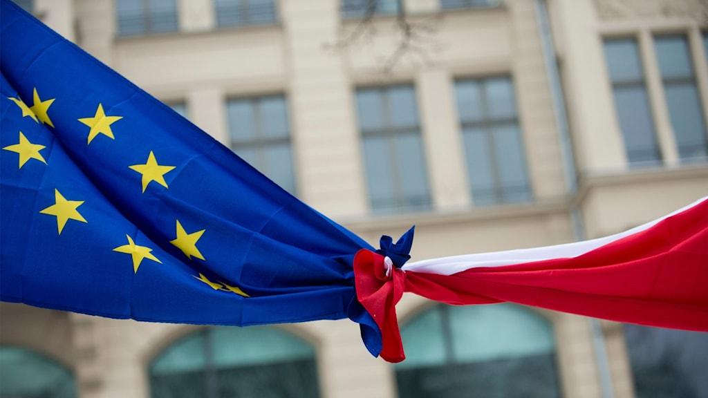 EU-flagga knuten ihop med Polens flagga.