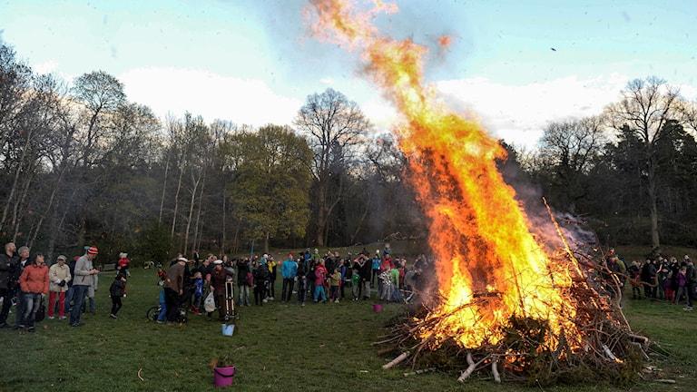 En majbrasa brinner med människor samlade kring elden.