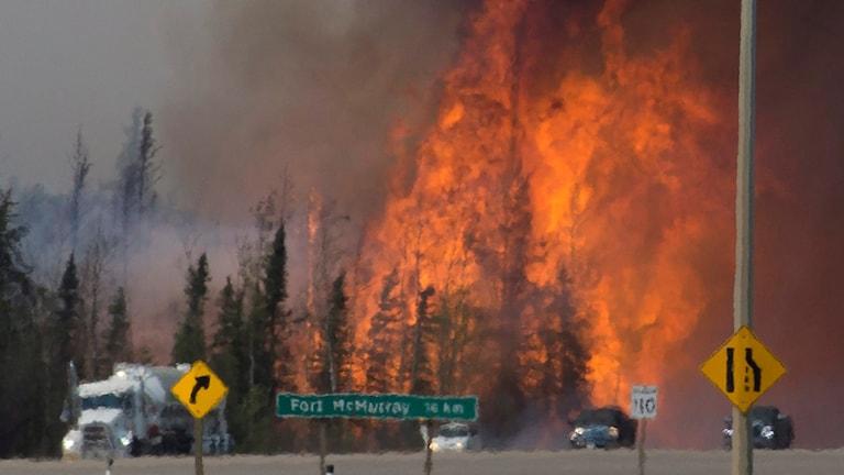 Bilar och lastbilar försöker ta sig förbi och igenom det brandhärjade området.