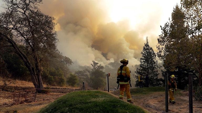 Brandman i eldhärjat område, rök i bakgrunden.