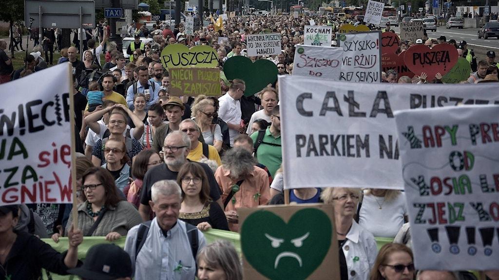 Polen i protest mot avvverkning av urskogen Puszcza Bialowieska