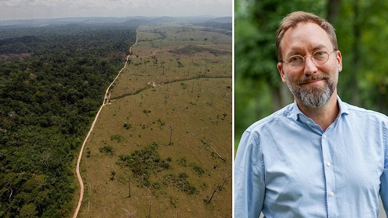 Olle Forshed, regnskogsexpert vid Världsnaturfonden.