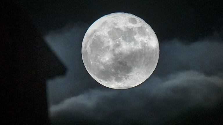 """Månen i kväll är en riktig """"supersupermåne"""". Här syns den från Malmö på tisdagskvällen."""