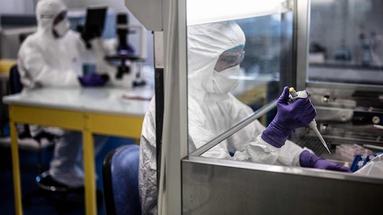 Forskare studerar viruset vid universitetslaboratoriet VirPath i Lyon.