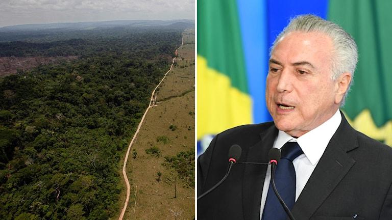 Bildkollage med en flygbild som visar skog i Amazonas och en man framför den brasilianska flaggan.