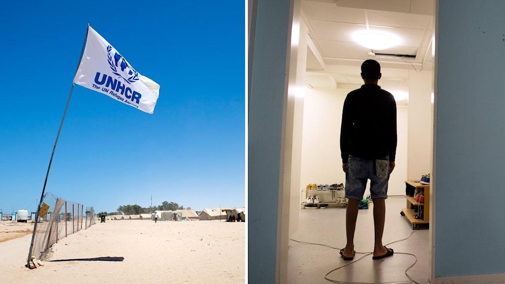 Mixbild: UNHCR:s logga och en bild på en flykting.