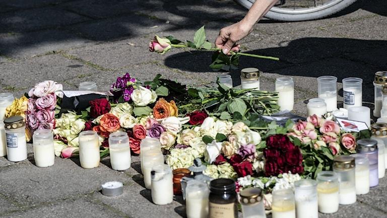 En kvinna lägger ner en ros vid minnesplatsen på Sergels väg i stadsdelen Ribersborg i Malmö där en 30-årig kvinna sköts till döds.