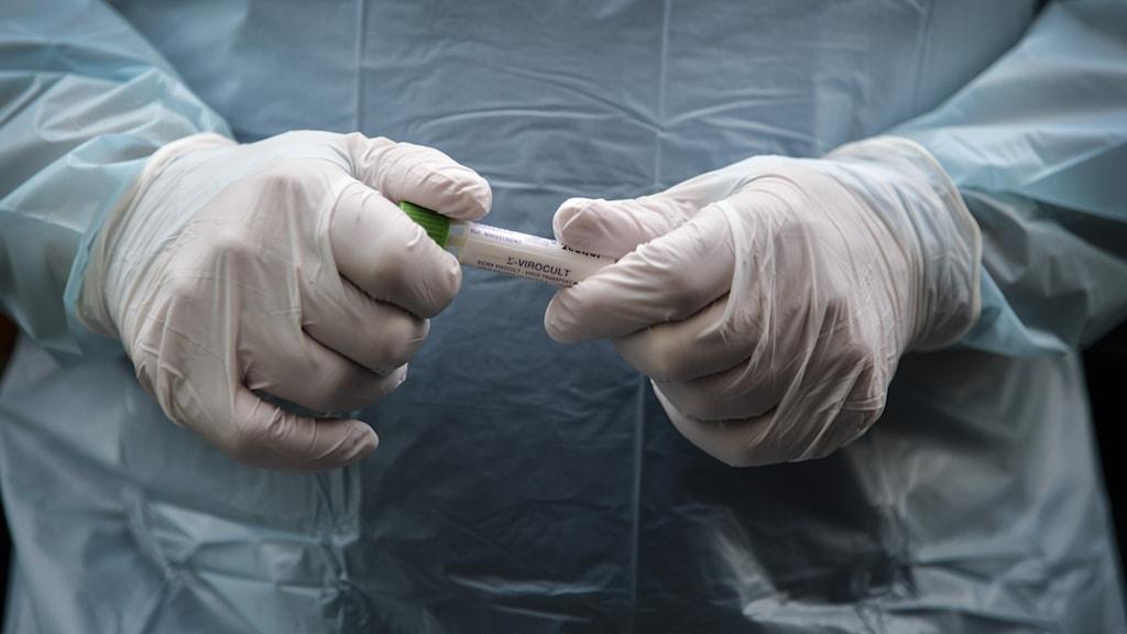Två händer klädda i platshandskar håller i ett provrör.