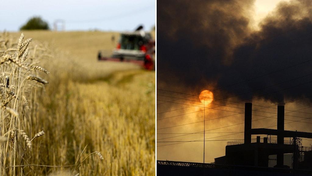 Förhandlingar om eu:s jordbrukspolitik