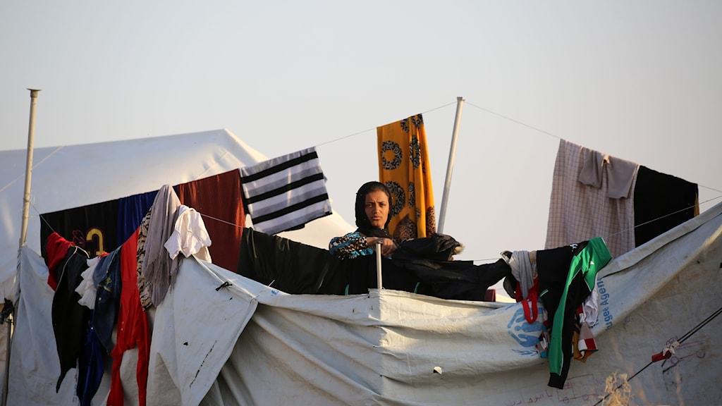 Flyktingar i Al-Hol.