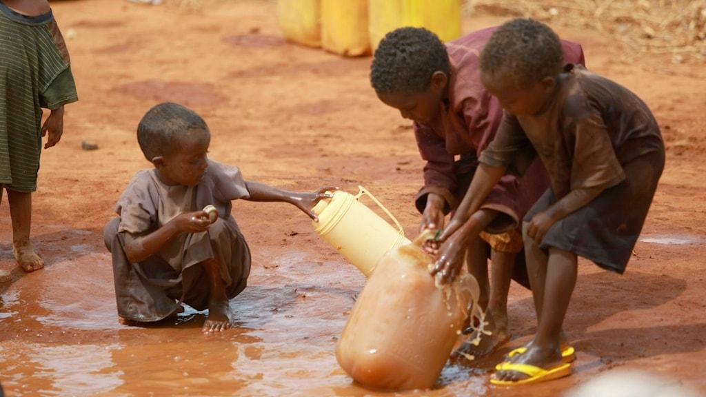 Barn drabbas av kortväxthet pga utsläpp av kväve från konstgödsel till dricksvatten visar Världsbankens rapport