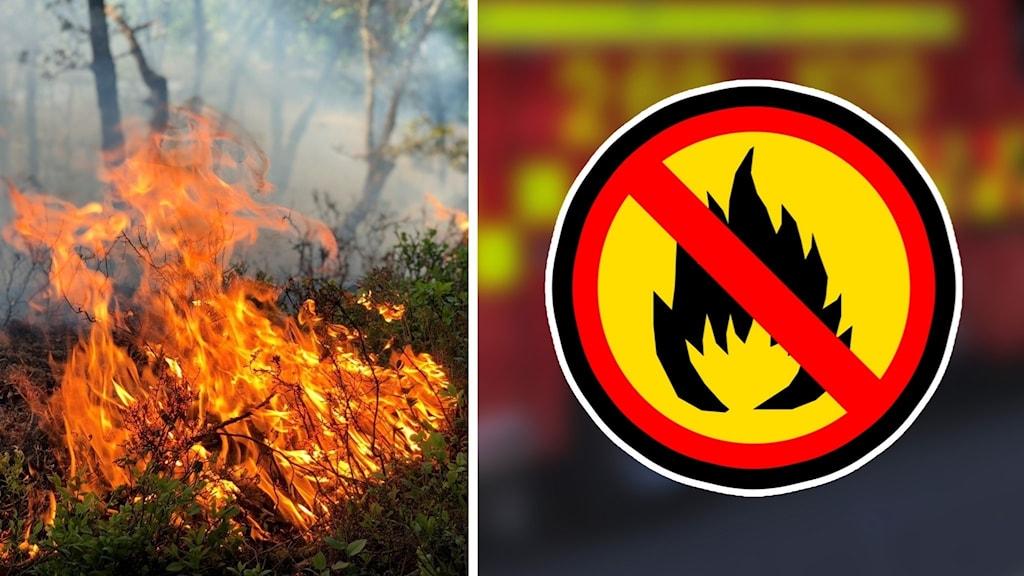 eldningsförbud skogsbrand