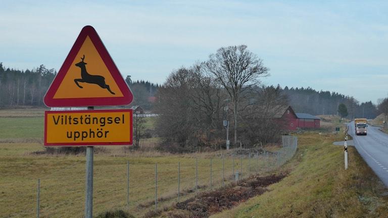 Viltskylt Riksväg 23-34, Foto: Peter Weyde, Sveriges Radio