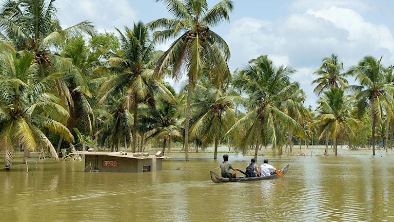 Tre personer sitter i en kanot och paddlar förbi ett översvämmat gårdshus.