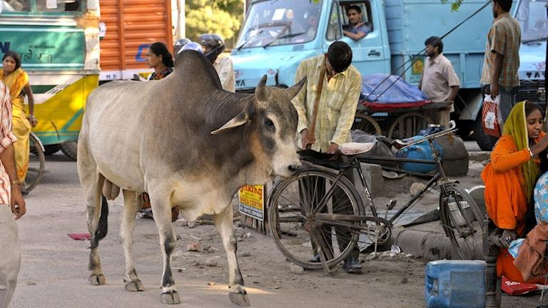 Gatuliv i New Delhi (arkivbild).  Foto: Leif R Jansson / TT.