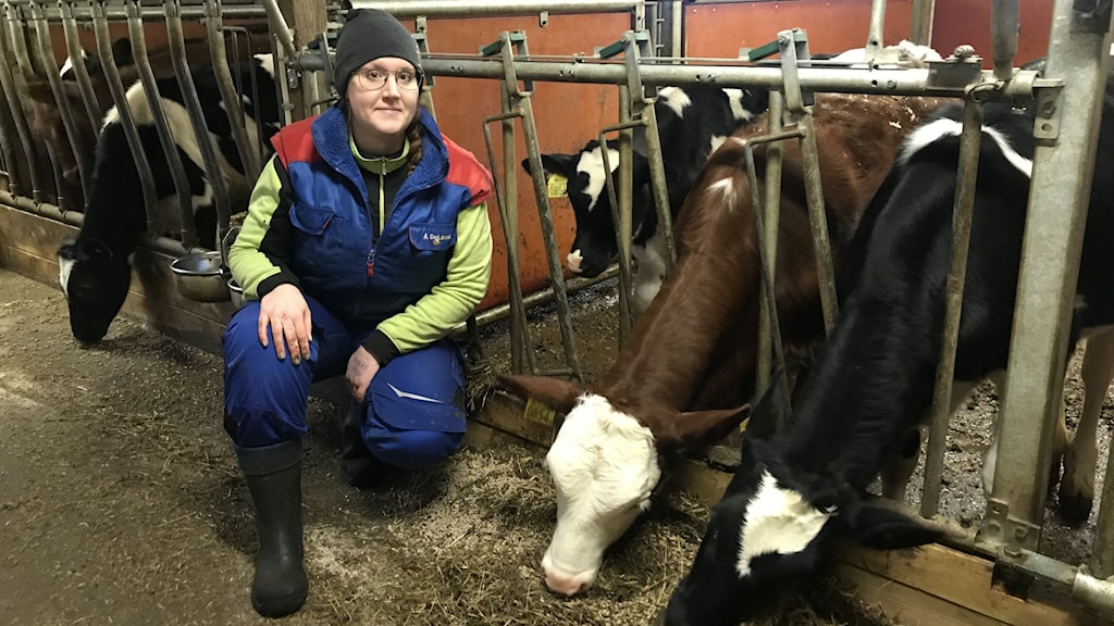 Mjölkbonden Malin Gustavsson sitter i ladugården bredvid två av sina djur