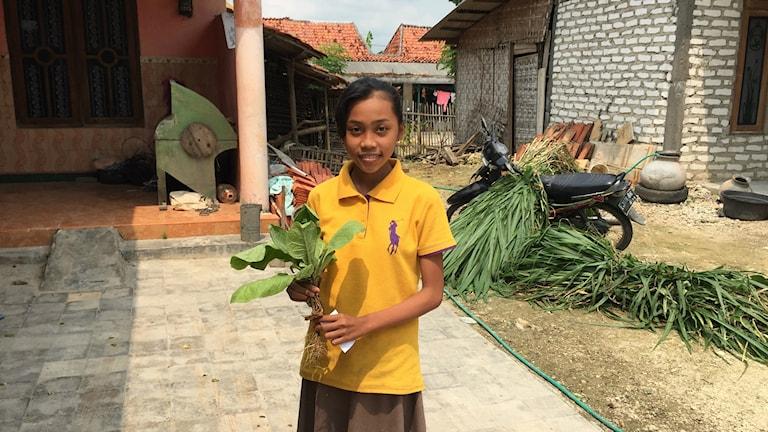 Jag får ofta huvudvärk och mår illa när jag skördar tobak på familjens fält, berättar 14-åriga Hayati på ön Madura i Indonesien.