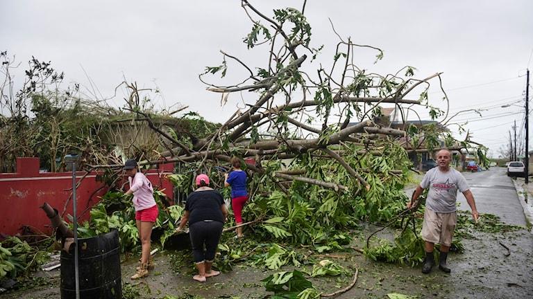Humacao, Puerto Rico, efter orkanen. Foto: Carlos Giusti//TT.