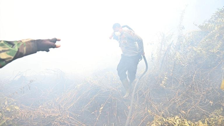 Indonesiska brandmän försöker släcka en skogsbrand.