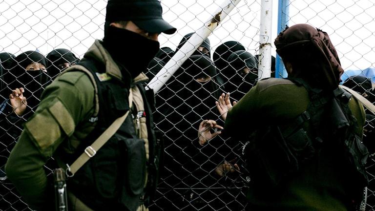 Experten: Fler svenskar kommer smugglas ut från IS-läger