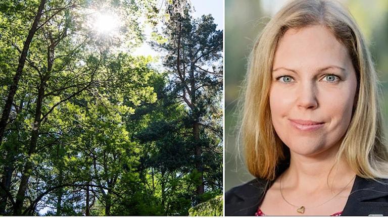 Skogsindustriernas miljödirektör Helena Sjögren.