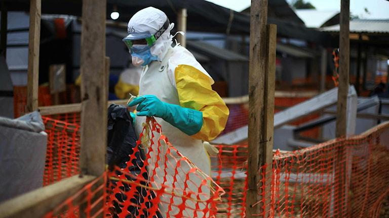 Ebola i Kongo.