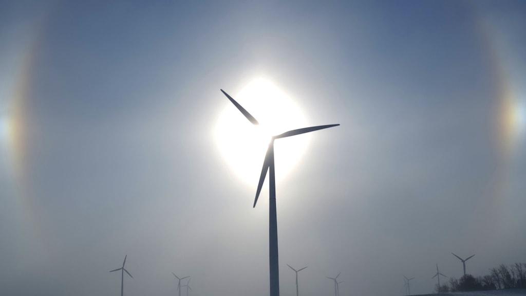 Vindkraftverk i motljus