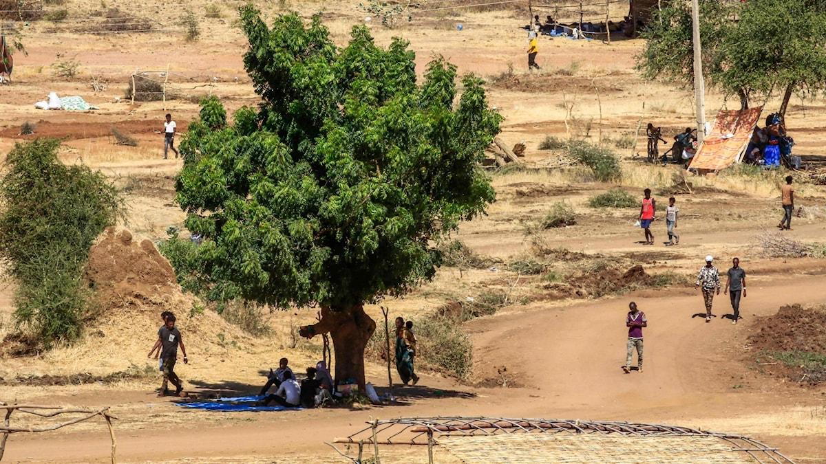Över 80 döda efter massaker i Etiopien