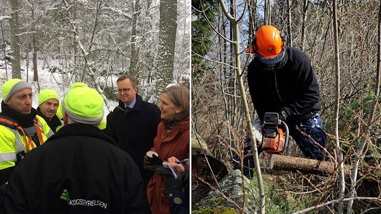 Mikael Damberg och Karolina Skog möter skogsarbetare.