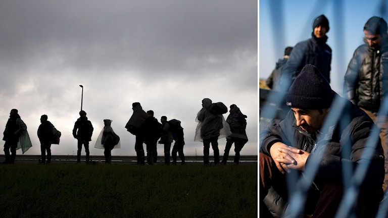 Delad bild: Migranter går vid den serbiska gränsen, och migranter sitter vid ett stängsel