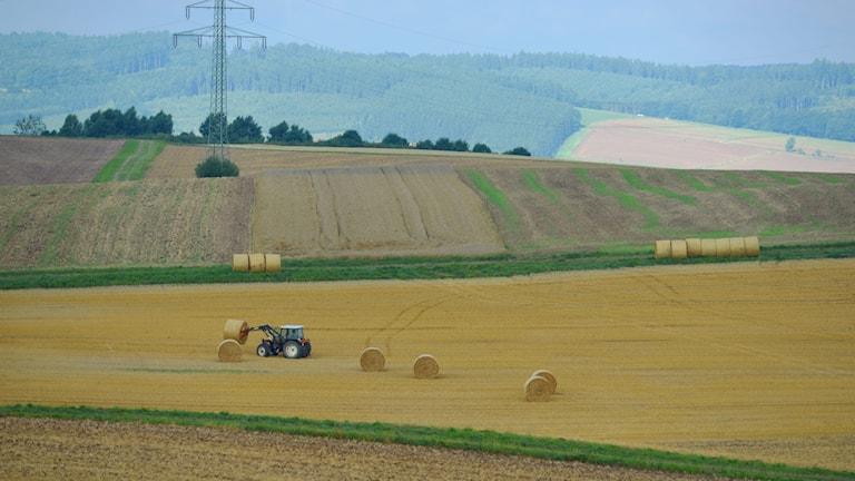 Jordbruksmark i Danmark.