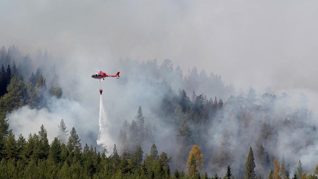 Skogsbrand strax utanför Hammarstrand på tisdagen. Vattenbombning med hjälp av helikoptrar.