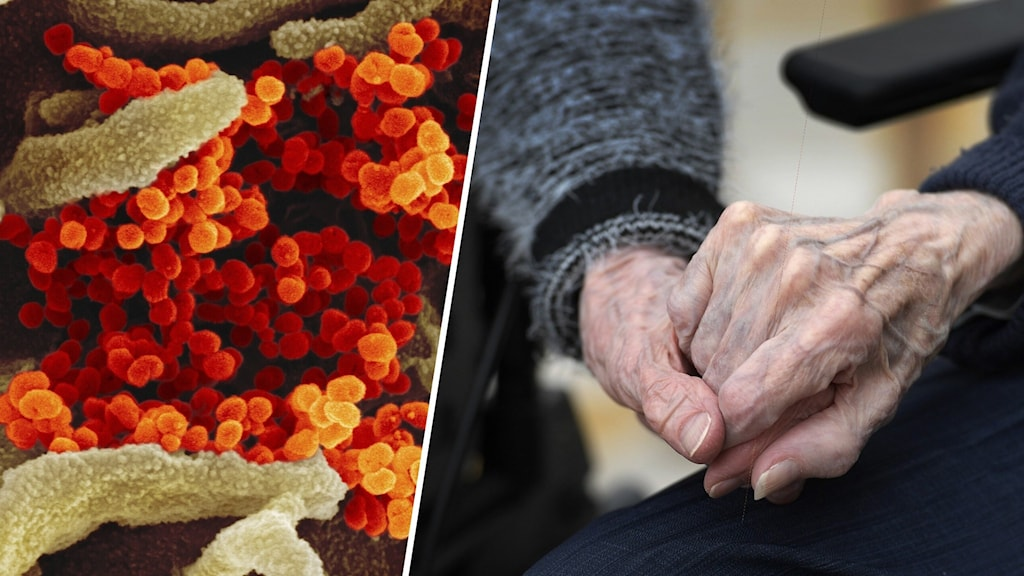 Bildsplitt med en bild på en mikroskopisk närbild på coronaviruset samt en bild på en äldre persons hand.