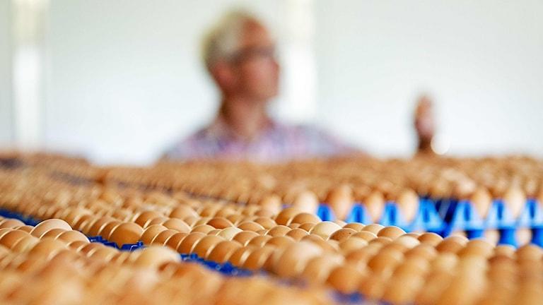En man tittar noggrant på ett ägg, med många ägg i tjog framför honom.