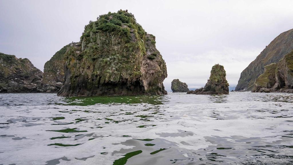 Ett stort utsläpp på den ryska östkusten innehåller sannolikt ett vattenlösligt gift