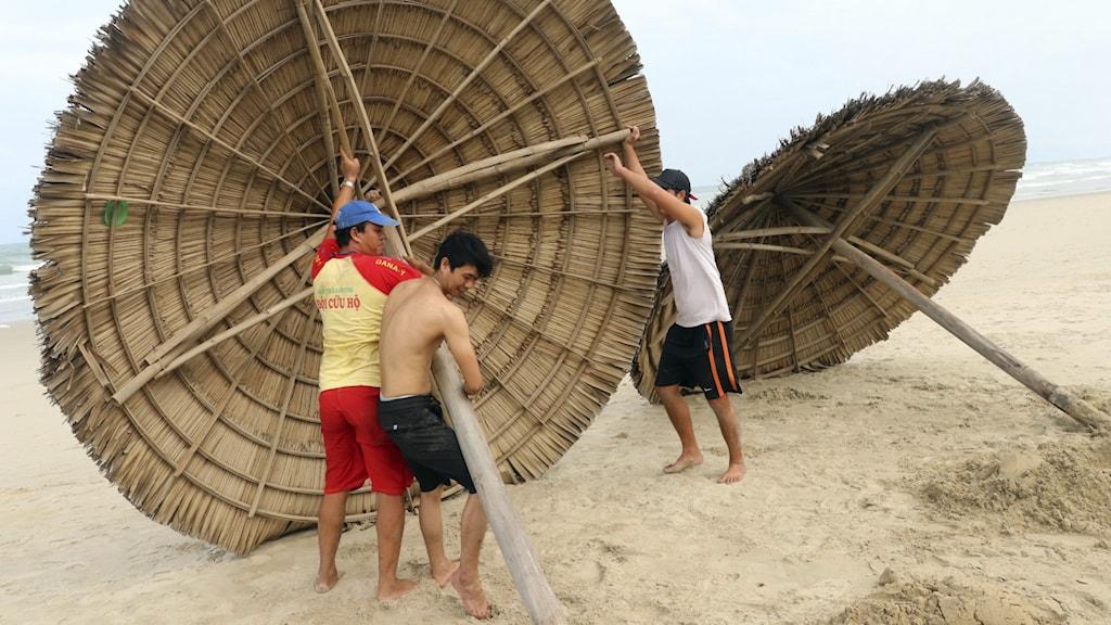 Strandparasoller monteras ned i väntan på att tyfonen Molave ska dra in över Vietnam.