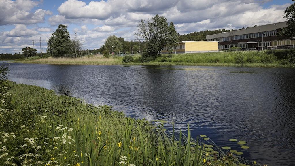 Bild på ett vattendrag.