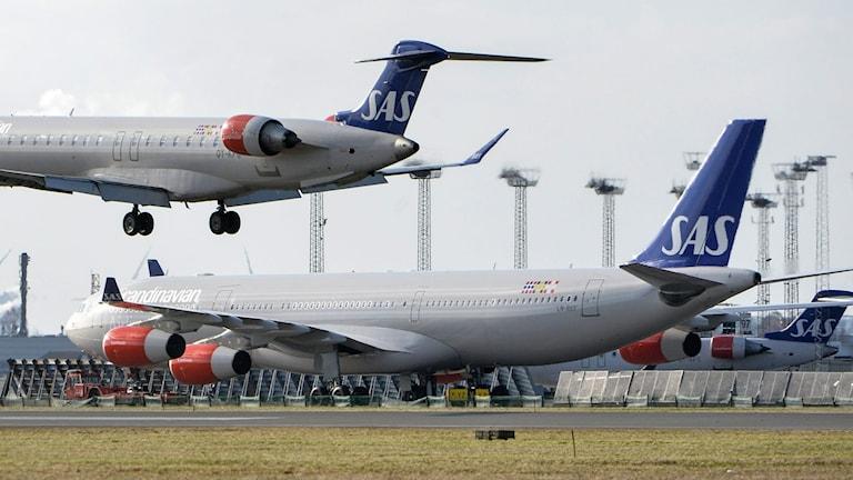 Sas plan Airbus 340