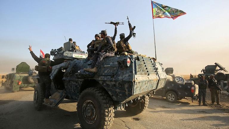Irakiska stryrkor på väg mot Mosul.