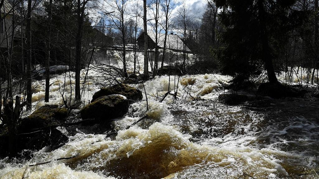 Höga vattenflöden i Testeboån i slutet av april.