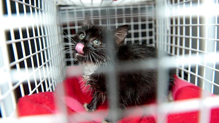 Lagförslag om att hindra djurplågeri