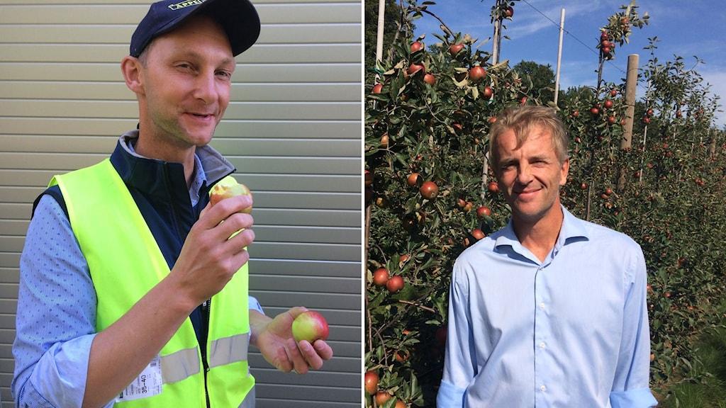 Äppelodlarna Henrik Stridh och Jan Erhensvärd