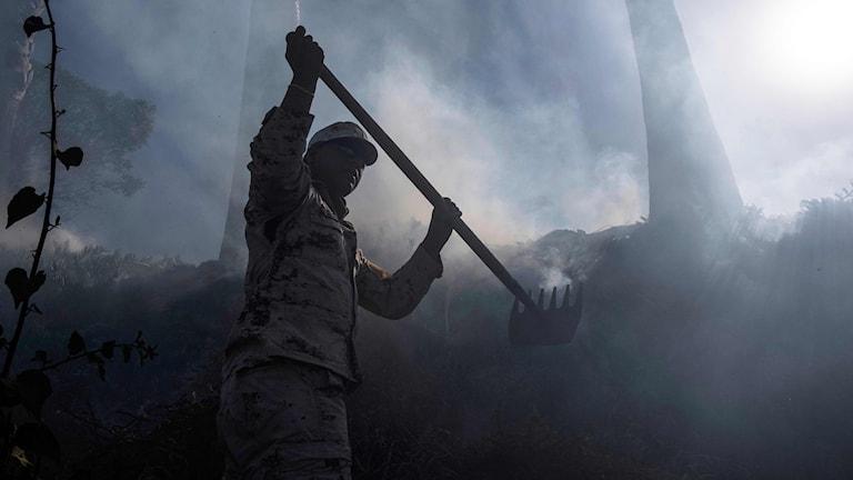 Kamp mot skogsbränder utanför Tijuana.