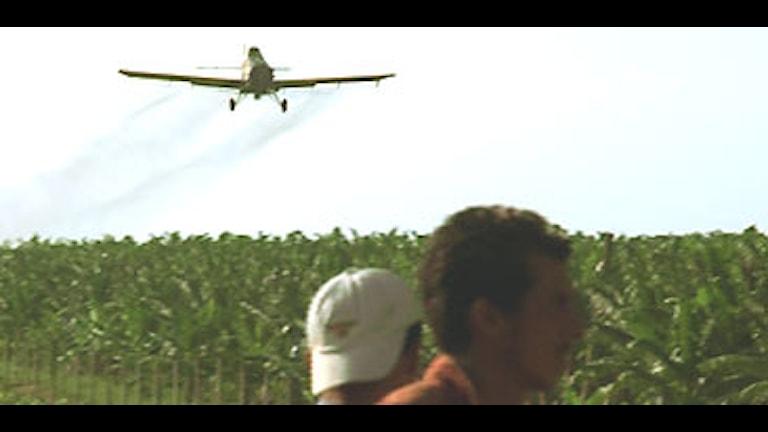 Bild ur dokumentären Bananas visar besprutning av bananplantage. Foto: WG Film/Scanpix.