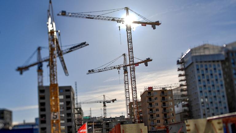Byggkranar vid Hagastaden i Stockholm.